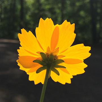 FlowerStencil1-Pic
