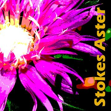 FlowerStencil2