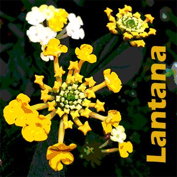 FlowerStencil5